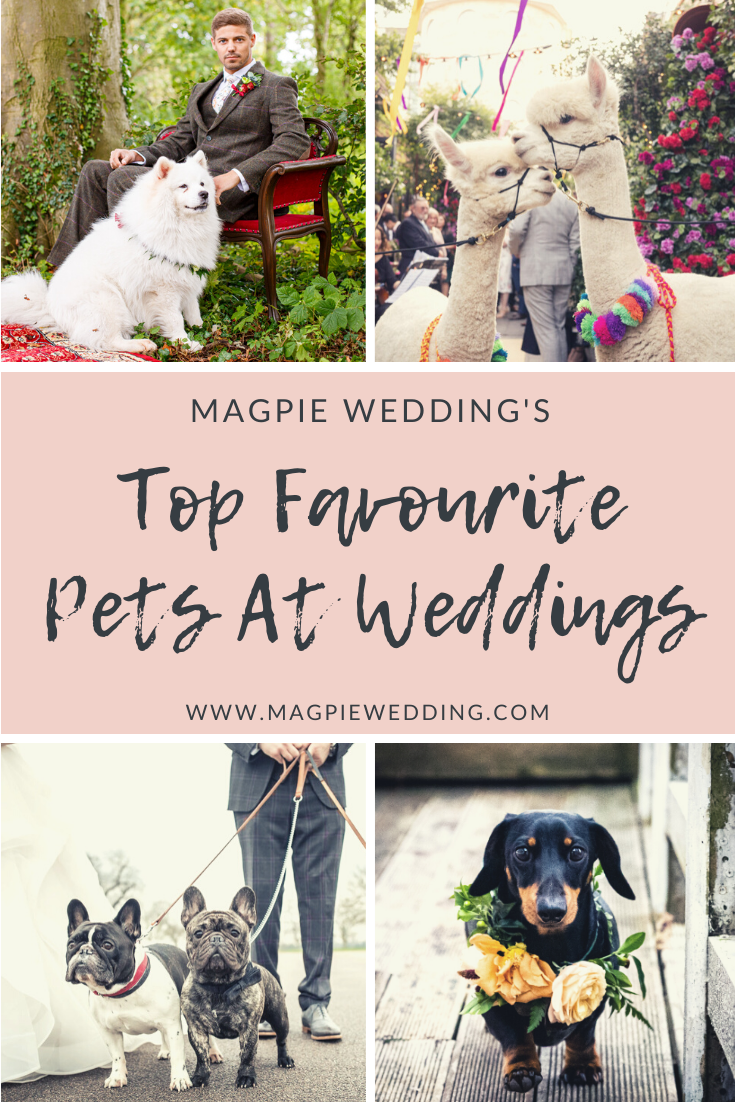Our Favourite Pets At Weddings For National Dress Up Your Pet Day