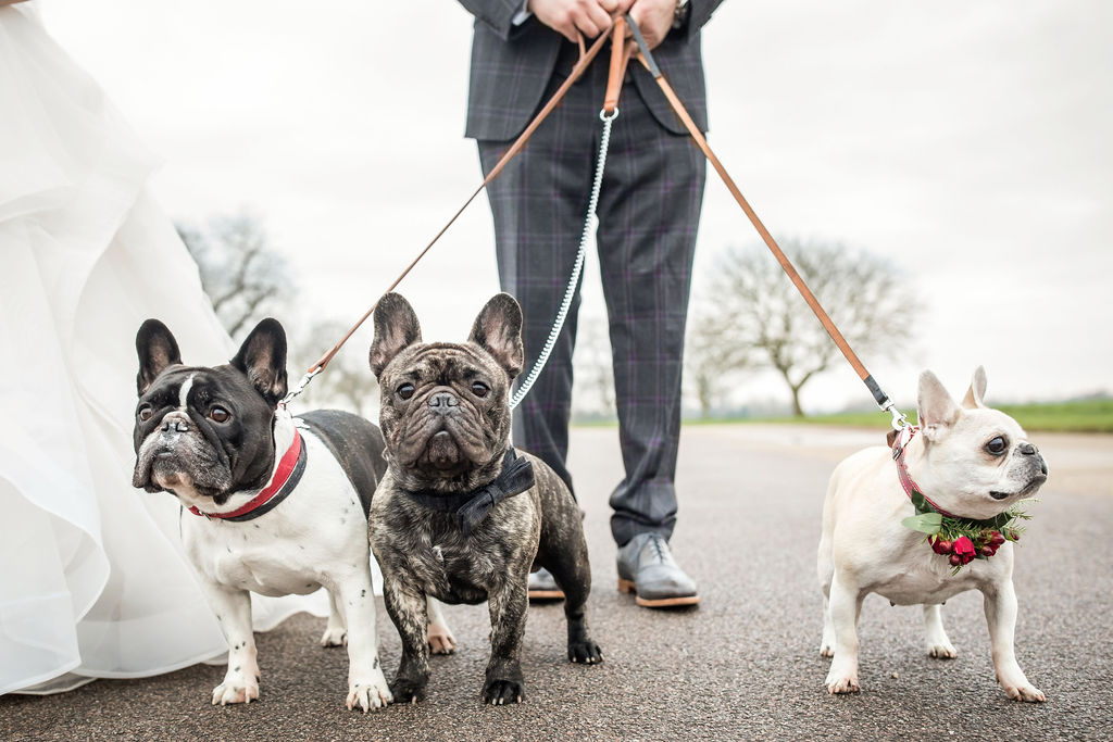 Pets At Weddings - Bridesmaid Bulldogs In Real Wedding