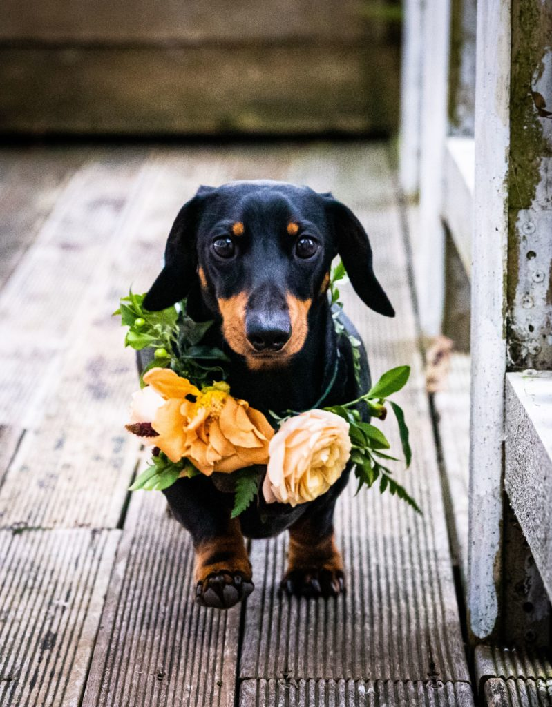 Warm Autumn Wedding Inspiration With A Sausage Dog at Solton Manor