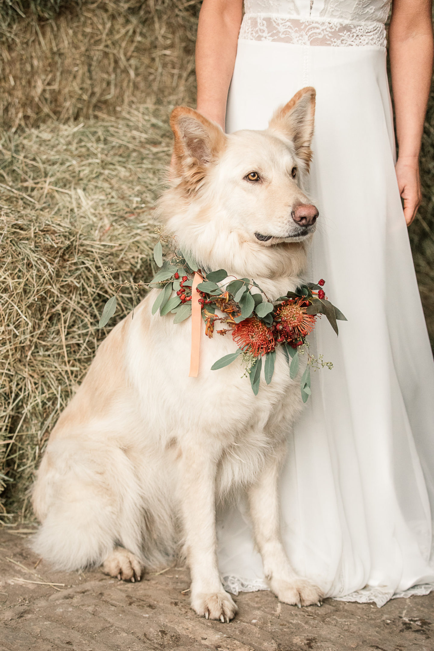 Animals At Weddings: Inspiration for National Dress Up Your Pet Day